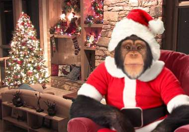 Name:  monkeychristmas1.jpg
