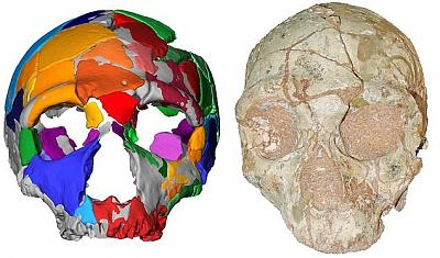 Click image for larger version.  Name:15875108-7233057-The_Apidima_2_cranium_right_of_the_neanderthal_and_its_reconstru-a-3_1562771986.jpg Views:25 Size:102.0 KB ID:213456