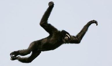 Click image for larger version.  Name:leaping-gibbon.jpg Views:55 Size:18.9 KB ID:213417