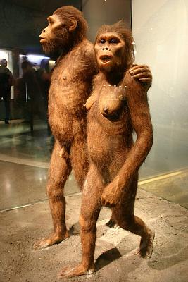 Click image for larger version.  Name:austrolopithecus.jpg Views:1745 Size:93.9 KB ID:60665