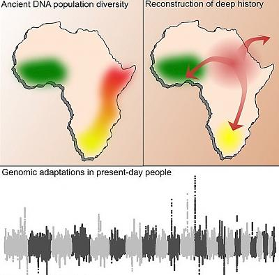 Click image for larger version.  Name:447BBD7B00000578-4899930-A_new_study_has_pieced_together_the_human_history_in_Africa_for_-a-9_15.jpg Views:163 Size:96.2 KB ID:177391